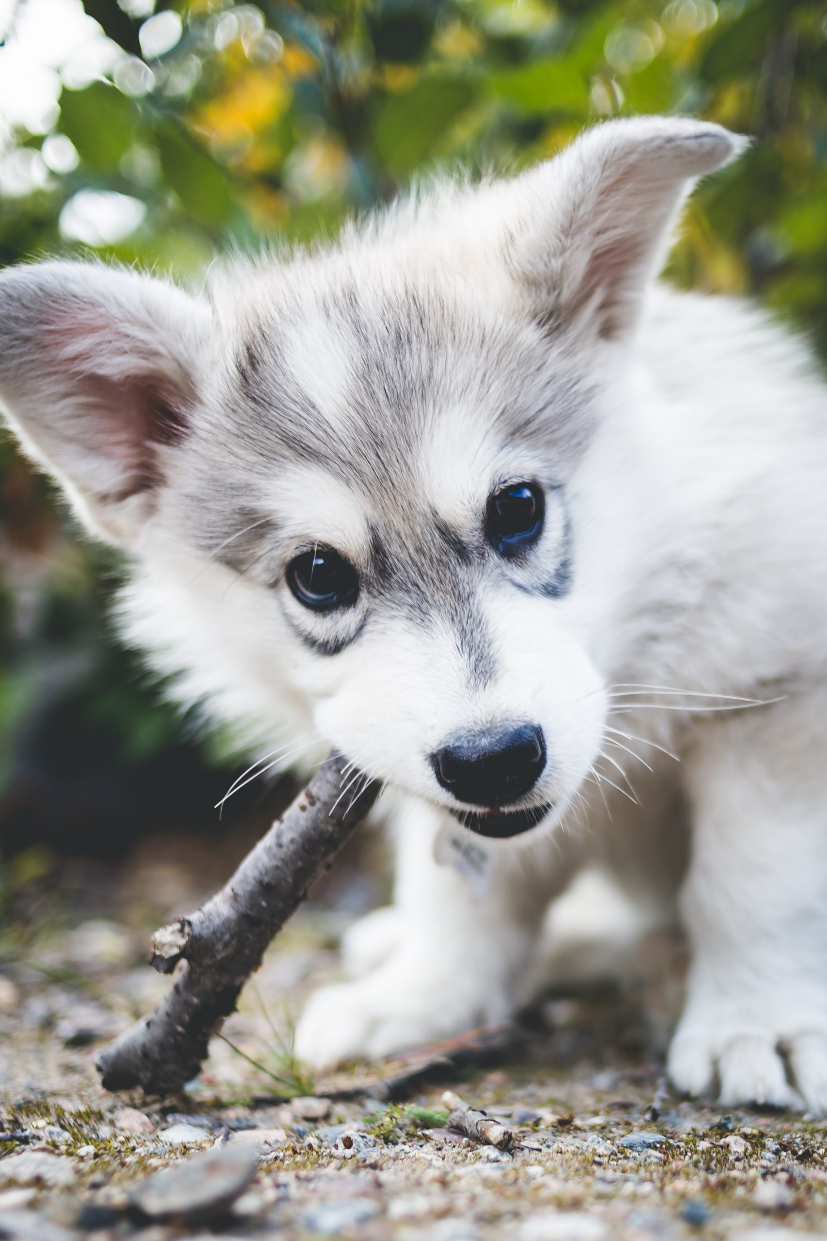 Tips for Caring for a Puppy
