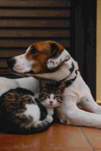 Tips for Having Multiple Pets at Home