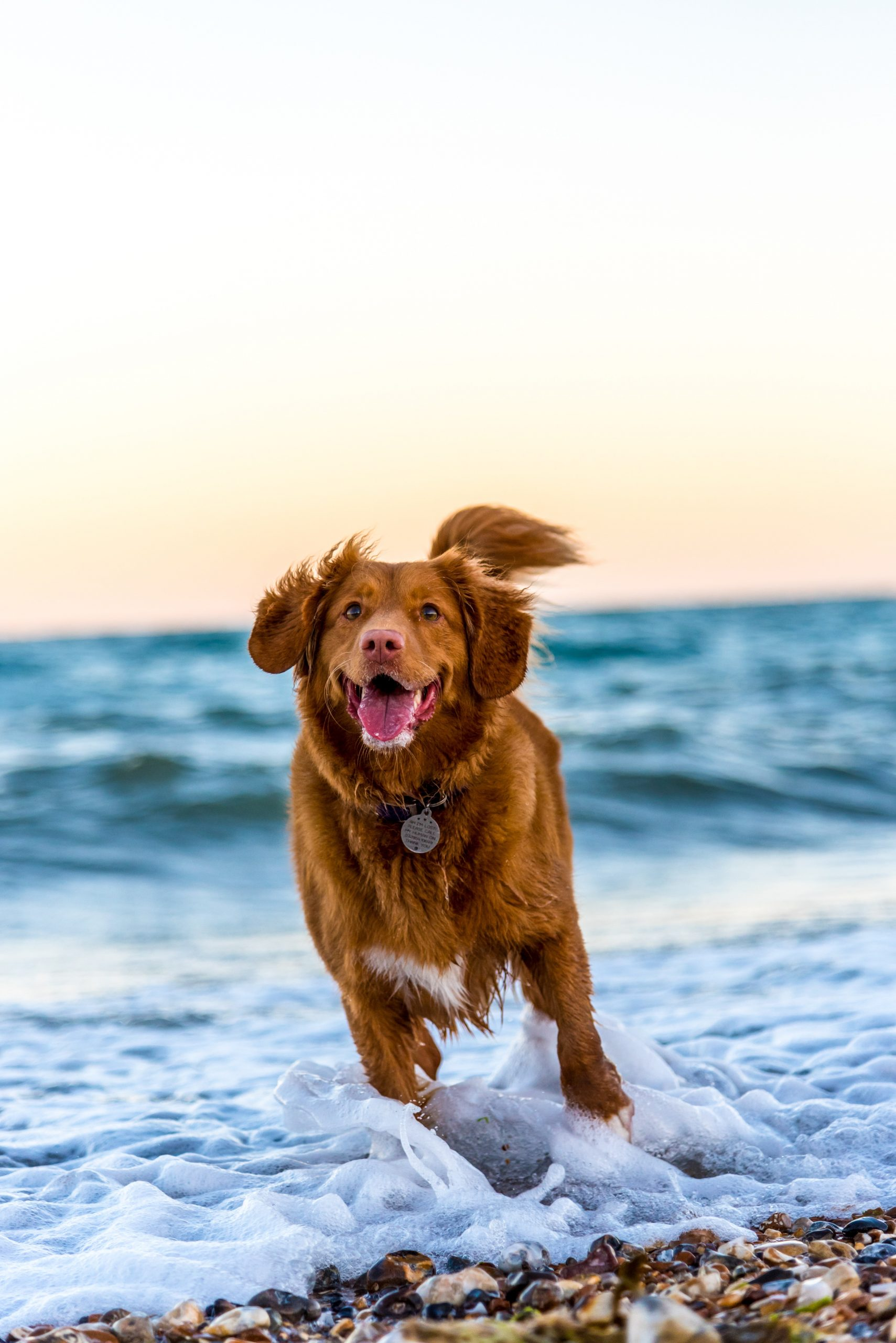 10 Ways to Make Your Dog Happy