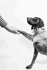 Adopt a dog, why is it good?