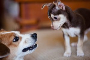 My dog is jealous how to find out and what to do?