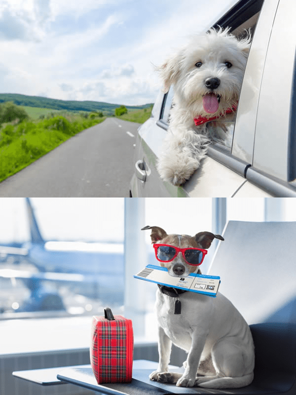 Tips for traveling with your pet.