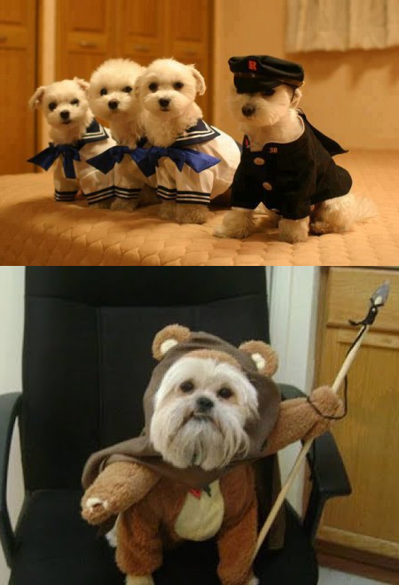 Dressed up puppies