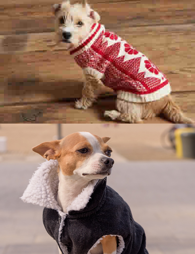 Dress up puppies. That's a good idea?