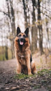 The best breeds of guard dogs to take care of your home