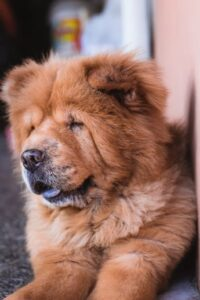 The oldest dog breeds in the world